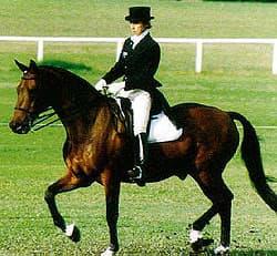 австралийская пастушья лошадь, уолер, waler, породы лошадей, фото фотография, лошади кони