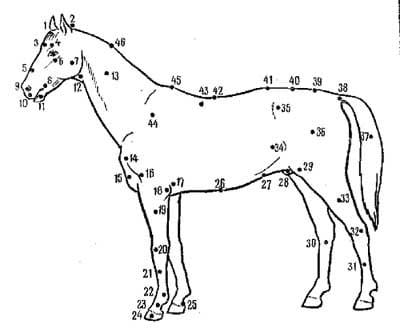 рис 1. экстерьер лошади, рисунок картинка изображение