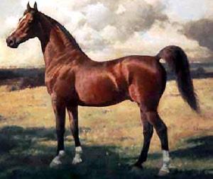 американская верховая лошадь, породы лошадей, фото фотография, лошади кони