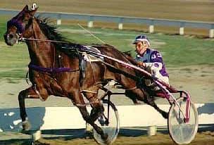 американская рысистая стандартбредная лошадь, породы лошадей, фото фотография, лошади кони