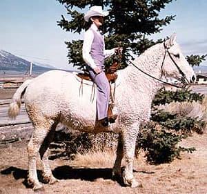 американский кучерявый башкир, породы лошадей, фото фотография, лошади кони