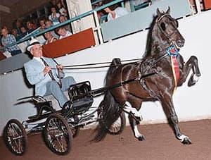 американский шетландский пони, фото фотография, породы лошадей, , лошади кони