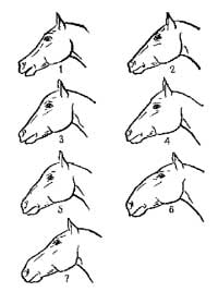 рис 2. голова лошади, рисунок картинка изображение