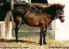 мияко, японская порода лошадей, фото фотография, лошади кони