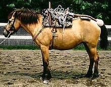лошадь хоккайдо, японская порода лошадей, фото фотография, лошади кони
