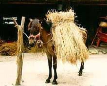 таишу, японская порода лошадей, фото фотография, лошади кони