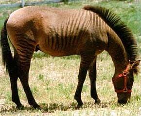 http://zooclub.ru/attach/horses/181.jpg