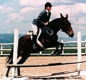 мул, лошак, фото фотография, лошади кони