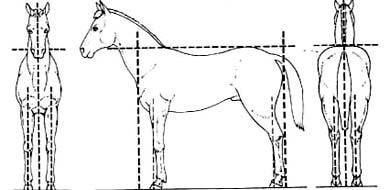 'Правильная лошадь', рисунок картинка изображение