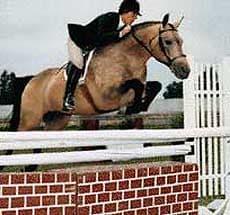 коннемара, порода лошадей коннемара, фото фотография, лошади кони