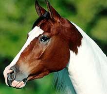 http://zooclub.ru/attach/horses/214.jpg