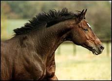 Лошадь, фото фотография, лошади кони