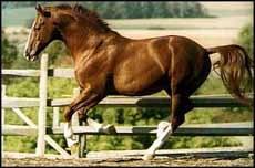 Транспортировка лошадей, лошадь фото фотография