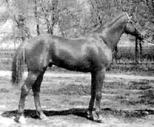 Кустанайская порода лошадей, кустанайская лошадь, фото, фотография, лошади кони