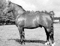 Латвийская упряжная лошадь, латвийская упряжная порода лошадей, фото, фотография, лошади кони