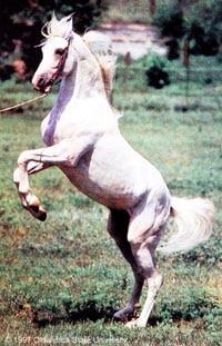 Терская лошадь, терская порода лошадей, фото фотография, лошади кони