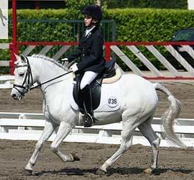 соррайа, порода лошадей соррайа, фото фотография, лошади кони