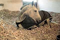 лошадь на бумажной подстилке