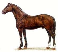 Новокиргизская лошадь, новокиргизская порода лошадей, картинка рисунок, лошади кони