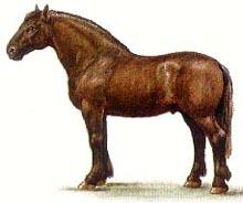 русская тяжеловозная лошадь, русская тяжеловозная порода лошадей, рисунок картинка, лошади кони