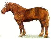 советская тяжеловозная лошадь, советская тяжеловозная порода лошадей, рисунок картинка, лошади кони
