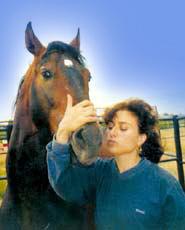 Конан Варвар, жеребец лузитано, 7 лет, фото фотография, иберийская лошадь, породы лошадей кони