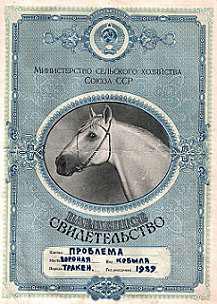 Племенное свидетельство лошади, рисунок картинка изображение