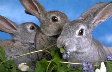 Кролики, фото фотография, грызуны