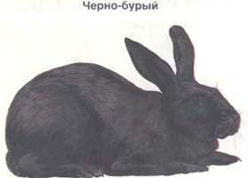 черно бурый, кролик, породы кроликов, рисунок