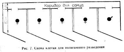 Полигамные клетки для шиншилл своими руками чертежи