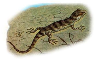 Гладкий геккончик (Alsophylax laevis), рисунок картинка