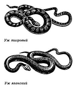 обои водяной змеи