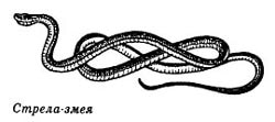 стрела змея, картинка, рисунок