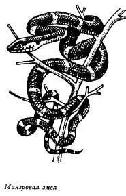 мангровая змея, рисунок, картинка