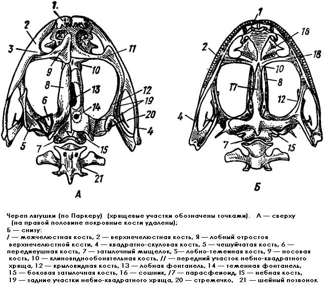 Картинка нервная клетка