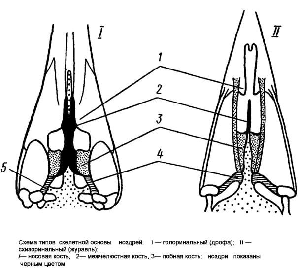 Схема типов скелетной основы