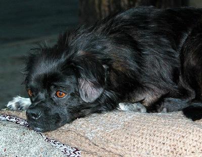Лечение на дому или ветеринарная клиника: что выбрать для своего питомца. Фото фотография