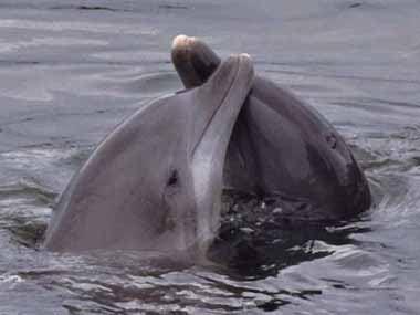 Дельфины, фото, фотография