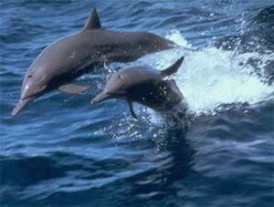 Дельфины, фото фотография