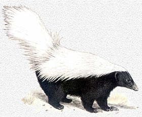 фото белых сосков