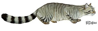 лесной кот, дикий кот, дикая европейская кошка (Felis silvestris), фото, фотография