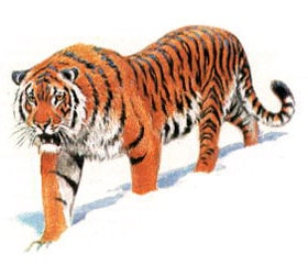 Ареал ранее тигр обитал в малой азии