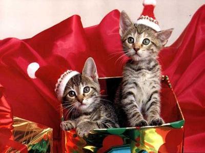 Котята. Новогодний подарок. Фото фотография