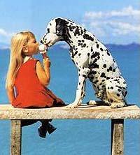 далматин и девочка, фото, фотография
