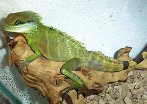 паразиты рептилий реферат