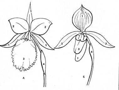 бисероплетение цветы схемы астры