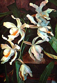 целогина гребенчатая, гребенчатая целогина, Coelogyne cristata, фото, фотография, орхидея