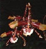 одонтоглоссум большой, большой одонтоглоссум, Odontoglossum grande, фото, фотография, орхидея