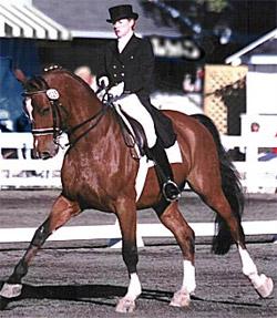 датская теплокровная лошадь, фото, фотография