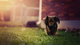 Овен она собака характер